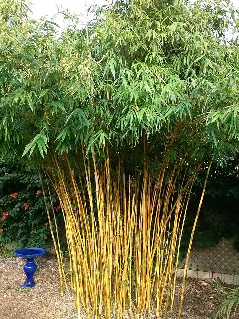 Bamboo Adelaide | Jungle in Willunga