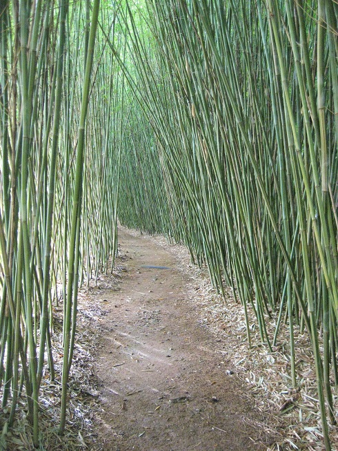 Bamboo Adelaide | Jungle in Willunga