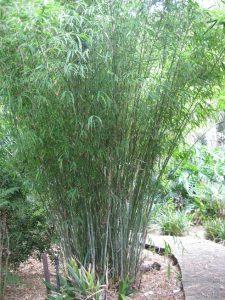 Nep Blue bamboo web.jpg