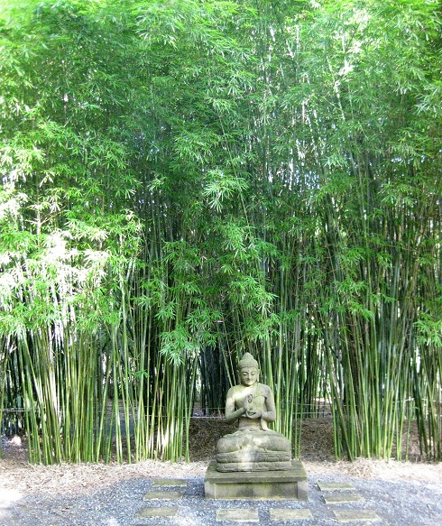 Screening Bamboo Ideal For Adelaide Jungle In Willunga