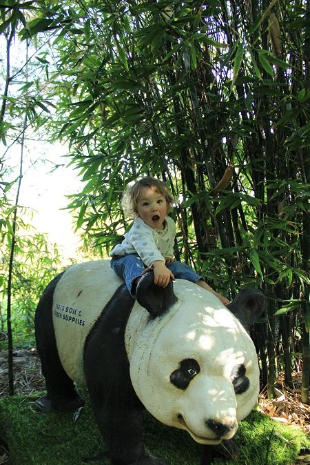 Weekend Fun in the Jungle