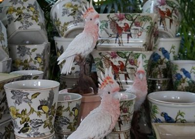 Botanica pots and galahs JIW cropped