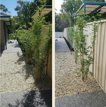 Customer Bamboo Adelaide