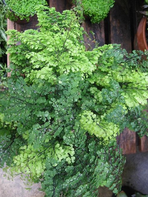 'Plantscape' your home