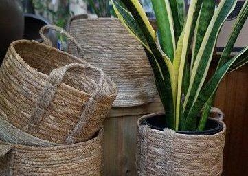 Baskets & Sanseveria JIW