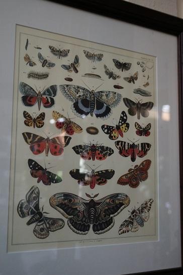 Butterfly print JIW