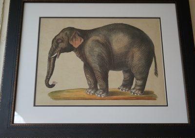 Elephant print JIW