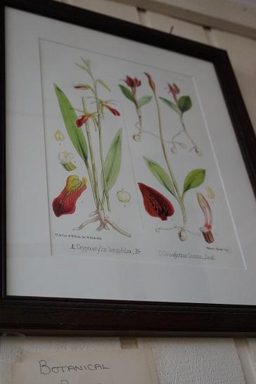 Flower print JIW