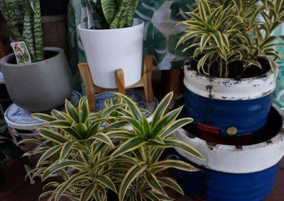 Pots cover various JIW