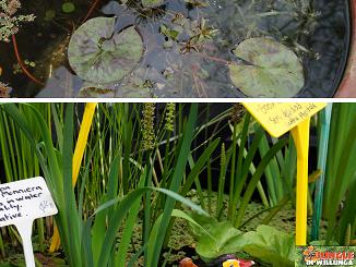 Water plants crop