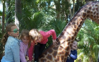 Kids go wild at our place…