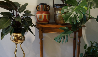Time to cozy up inside with houseplants…
